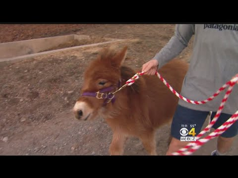 Donations In Memory Of Murder Victim Help Save Horses