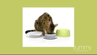 Yummy Travel Bowls for pets by Sleepypod - Instructional Video