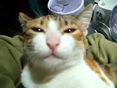 القطة المشمشية جات تنونو