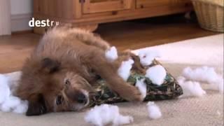Banfield Pet Hospital - Dog Behavior Challenges