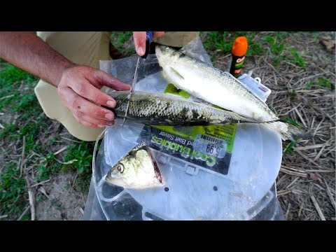 Fishing For GIANT CATFISH With BIG Baits!!!
