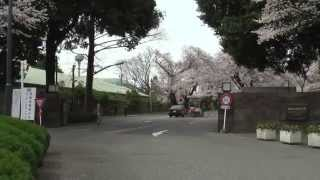 Spring has come to ICU. This video award nostalgic. 毎年、正門から...