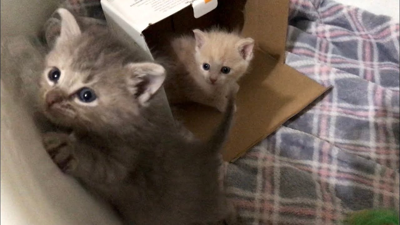 Incubator Baby Kittens Get To Stretch Their Legs  - Marshall & Mathers