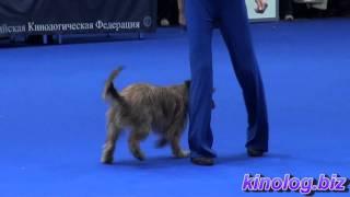 Танцы с собаками. Пиренейская овчарка. Евразия 2011.
