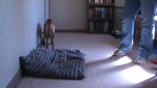 Teach Your Dog To Go Lie On A Bed