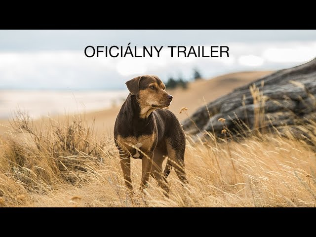 NÁVRAT DOMOV (trailer) - rodinný film od 24. januára v kinách