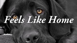 Feels Like Home | Chantal Kreviazuk Karaoke