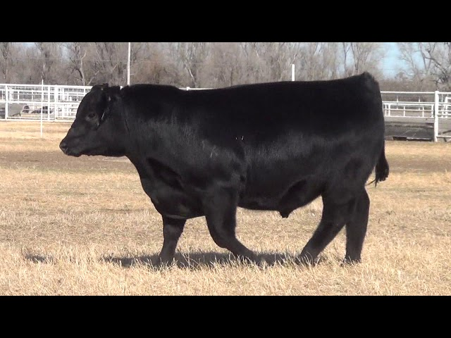 Express Ranches Lot 15