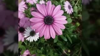 يابدع الورد