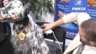 13 Лечение домашних животных