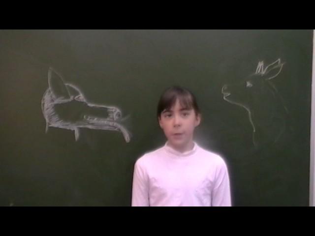 Изображение предпросмотра прочтения – АлександраСамсонова читает произведение «Волк и Ягнёнок» И.А.Крылова