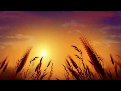 Free HD Wedding background, Free download motion background, Free Video animation NATURE 008