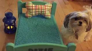 Adorable Dog Bed Diy Video