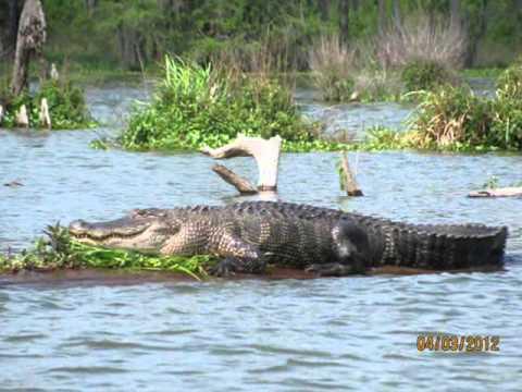 Louisiana Vacation 2012