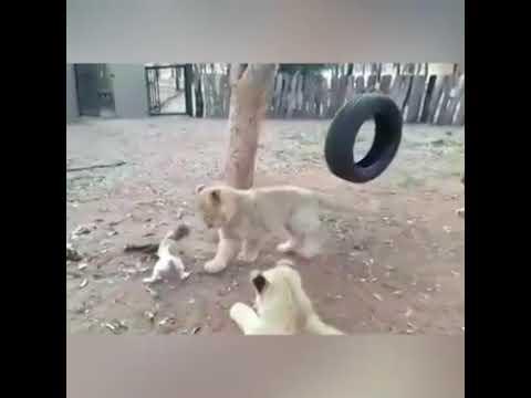 Tiere Die Sich Nur Erschrecken