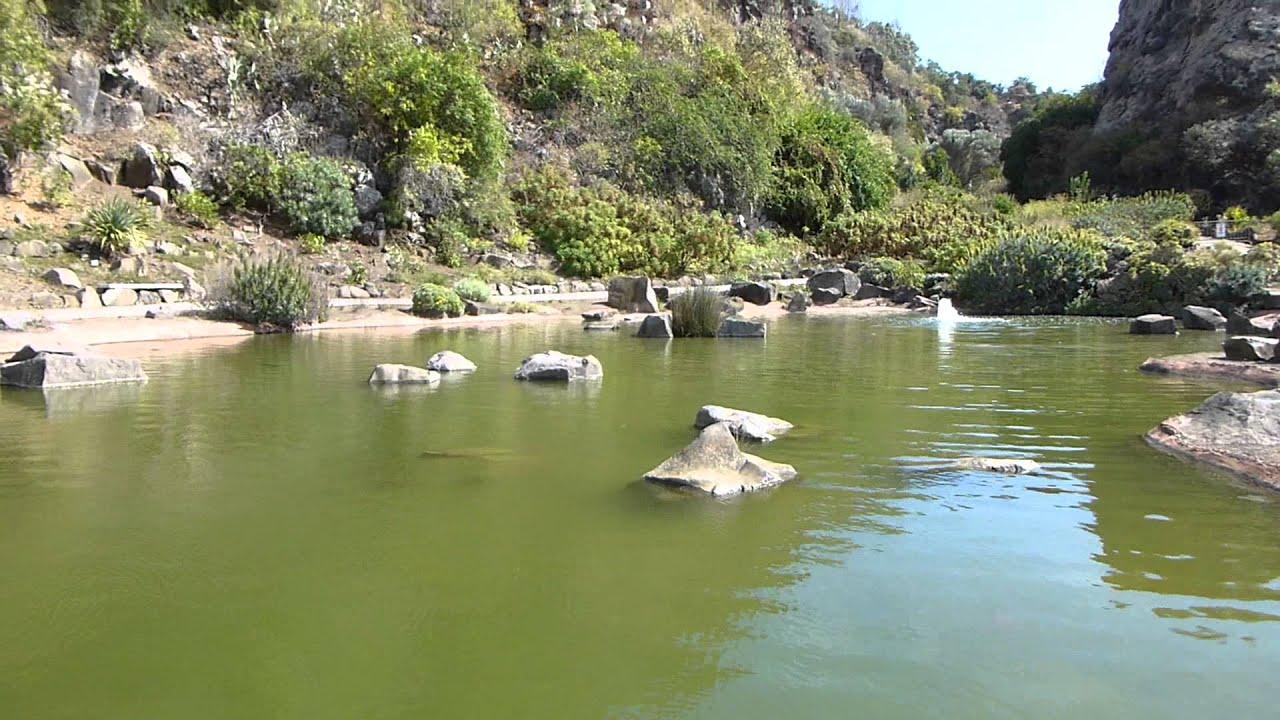 Jard n canario en las palmas de gran canaria estanque con for Estanque para patos y peces
