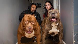 10 Необычных домашних животных 2019
