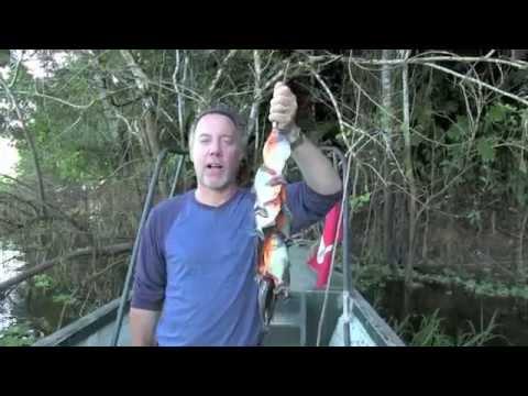 PIRANHA FISHING on the Maranon River in the Amazon
