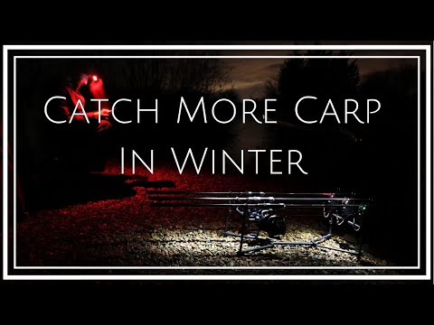 CARP FISHING ~ Winter Weather And Carp Location (up Your Catch Rate)