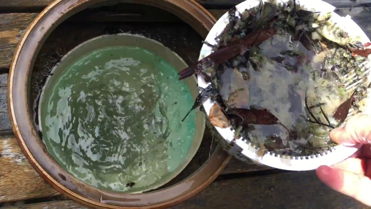 Vac your pool to waste how to why how to clean a green - How to clean a dirty swimming pool ...