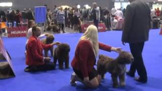 European Dog Show 2014,CZ-spanish water dog,perro de agua
