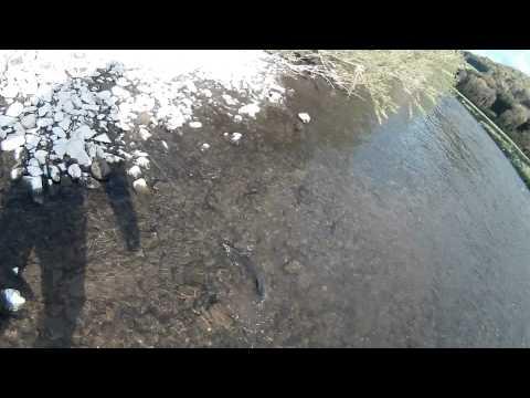 Chevesne géant - pêche au Luxembourg