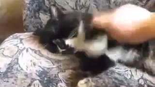 кот жив, Смех и только, Новые Приколы, Шутки, Смешные ролики Юмор! Прикол! Смех