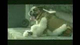 köpeğin sikilişi