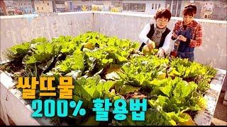 쌀뜨물,  200% 활용법