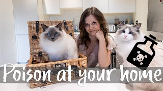 Poisonous to cats ?! Dangerous items in your home | Ragdolls Pixie and Bluebell