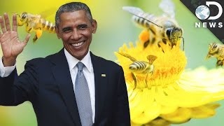 Can Obama Save The Bees From Extinction?