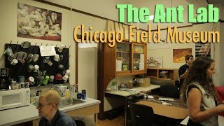 Visiting the Ant Lab at the Chicago Field Museum