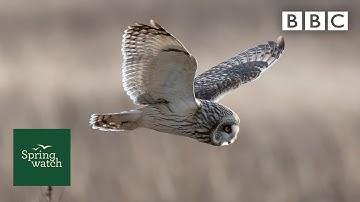 Our spring wildlife webcams live! 🐤🦊🐿 - Thu 4 June - Springwatch - BBC