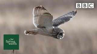 Our spring wildlife webcams live!