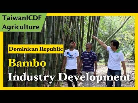 Bamboo Industry Development Project in the Dominican Republic