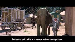 How to hide a elephant.