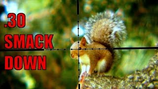 .30 Air Gun Squirrel Hunting