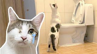 영문도 모른 채 새집으로 이사 온 고양이들