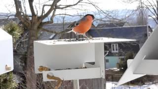 Birdfeeder-2