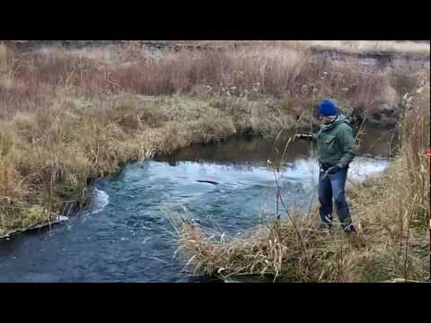 Jumping Trout, Crab Creek Washington