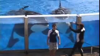 Tom Daley | SeaWorld®