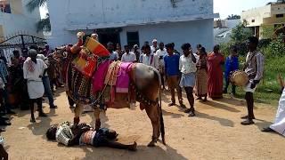 Gangireddula aata in village. Sankranthi special