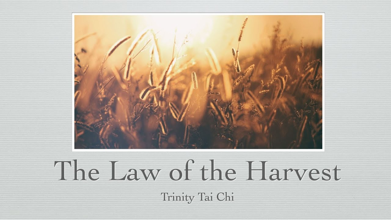 Trinity Tai Chi: The Law of the Harvest