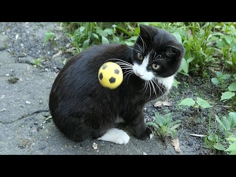 The cat wants to play with the yellow ball