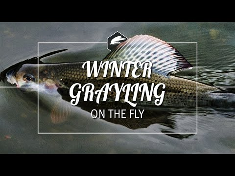 WINTER GRAYLING | RIVER CLYDE | FlY-FISHING