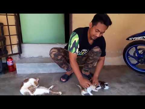 Viral cara buatkan anak kucing duduk diam
