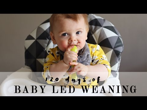 120 days of Baby Led Weaning