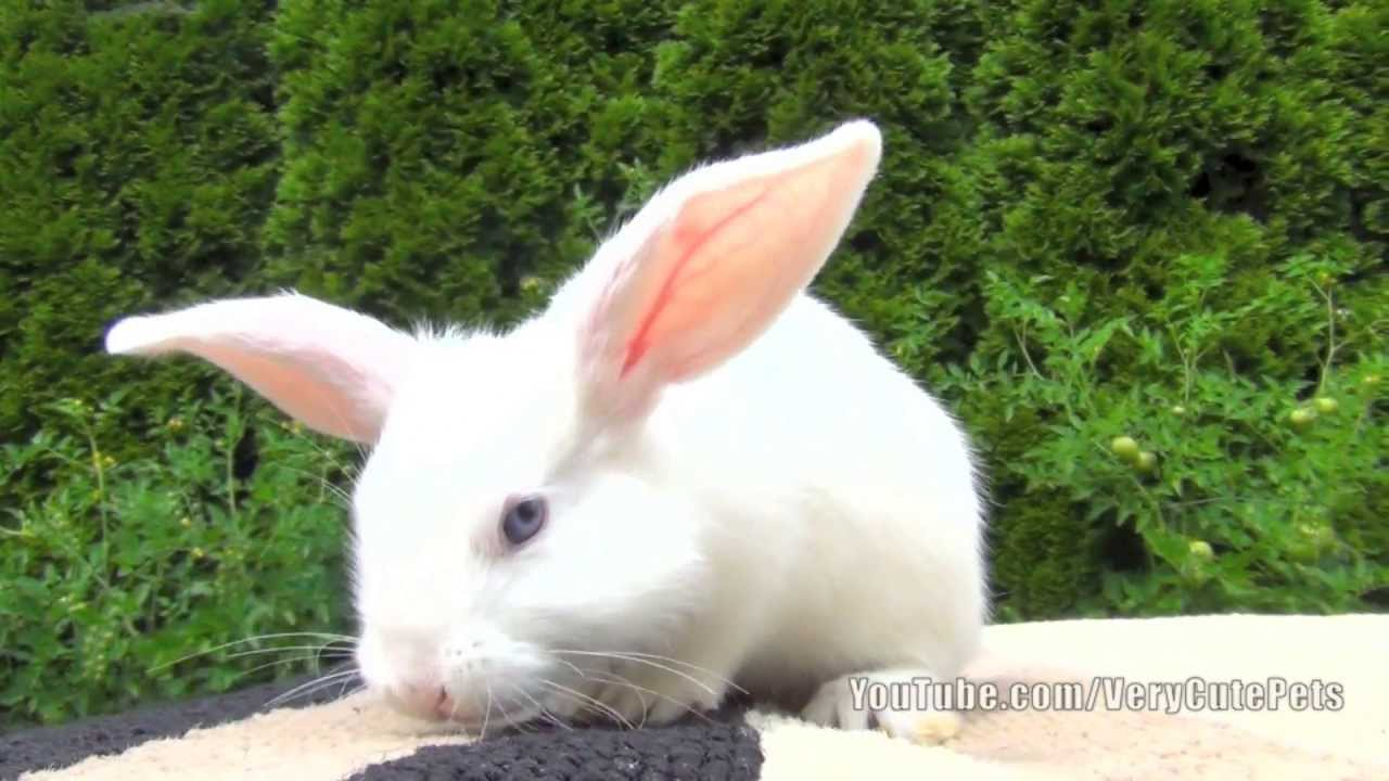 Cute Baby White Rabbits | Wallpapers Gallery