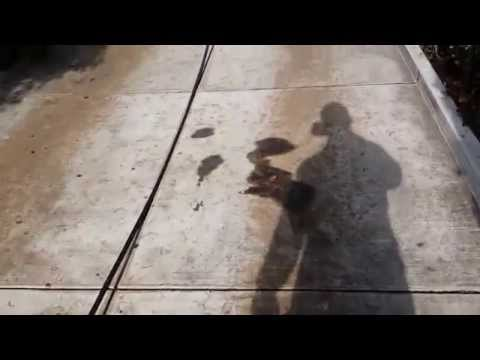 Pressure Washing Driveway in Willow Glen Area San Jose CA