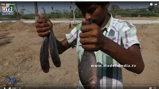 FISH FRY MAKING WITH LESS OIL | HEALTHY VILLAGE FOODS | FISH TANDOORI